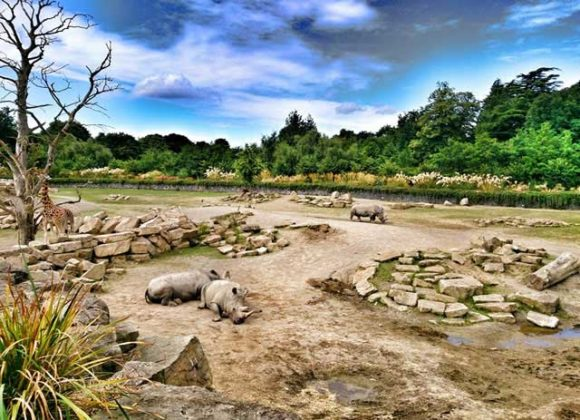 The best 25 things to do and see in Dublin Dublin Zoo