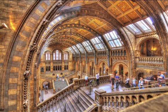 What to see what to visit in London Natural History Museum